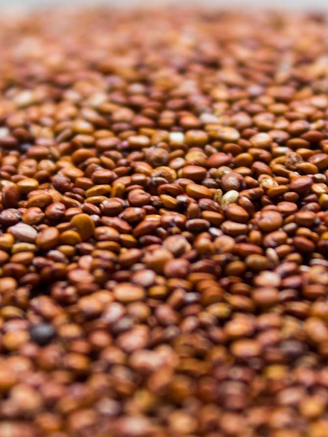 Quinoa-Roja-BIO
