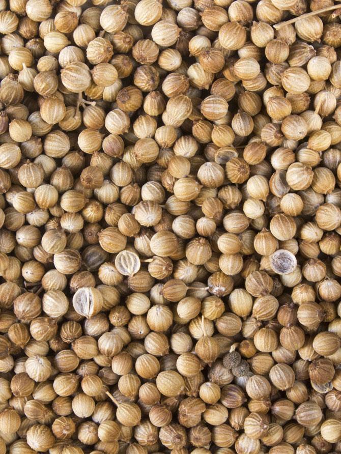 cilantro-grano