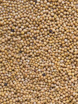 monstaza-amarilla-semilla